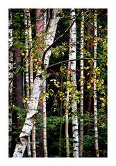 Der Herbstwald raschelt um mich her.