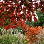 der Herbst...zeigt...was er kann...