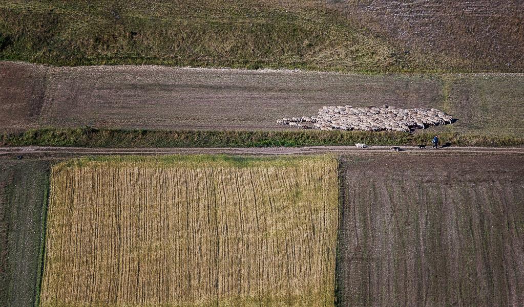 Der Herde