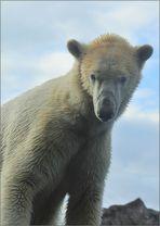 Der Herr der Arktis !
