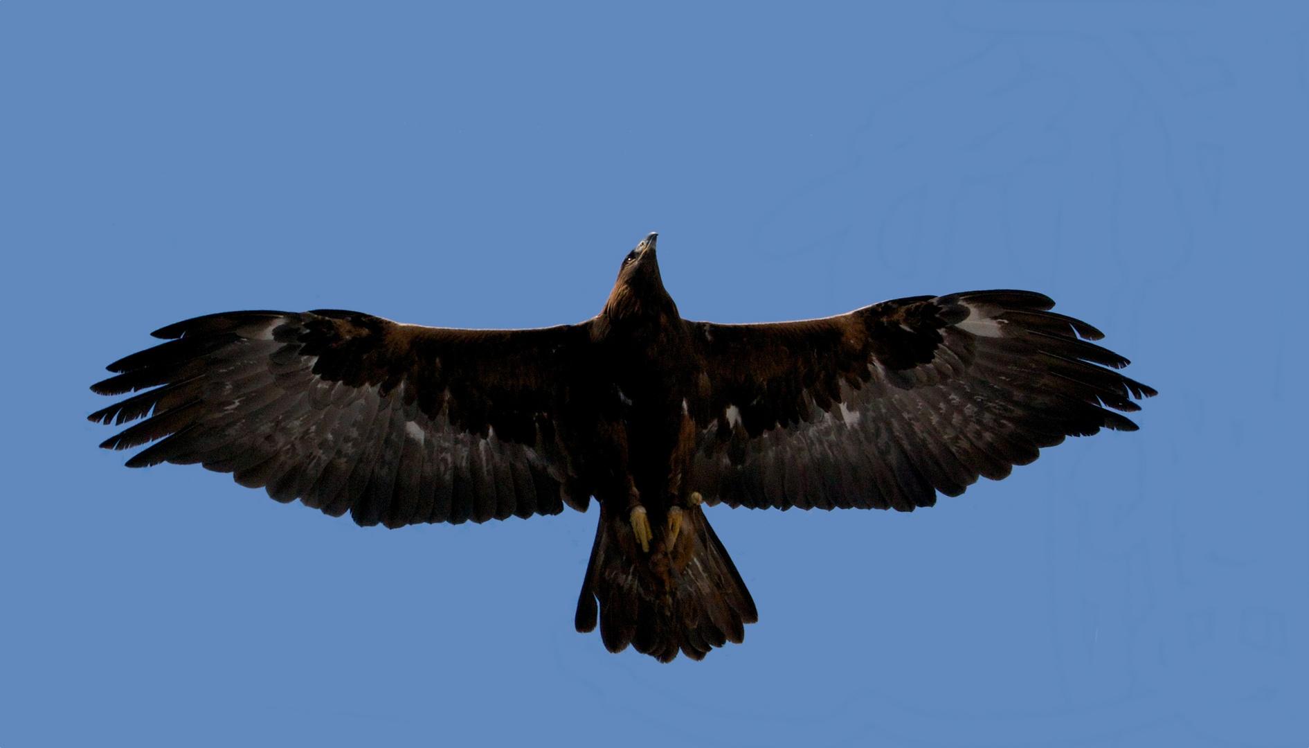 Der Herr der Lüfte fliegt über unsere Köpfe hinweg...