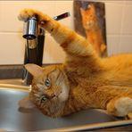 Der Herr hat Durst ...