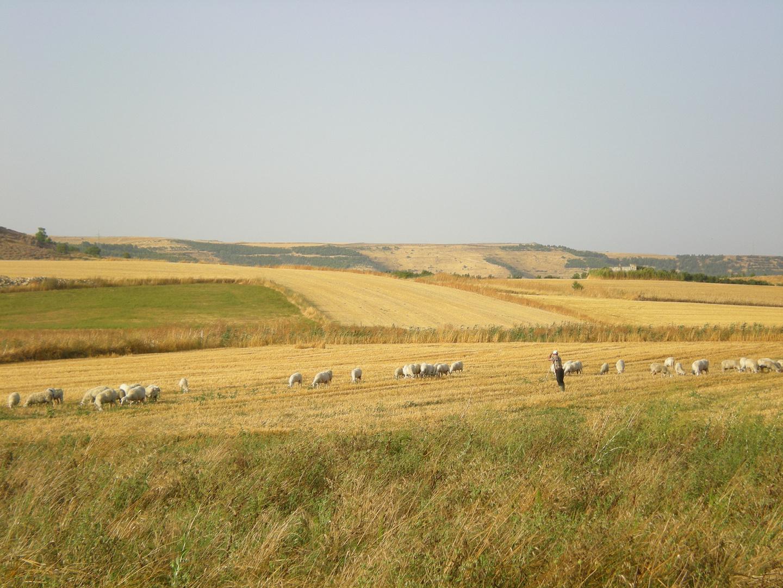 Der Hirte und seine Schafe