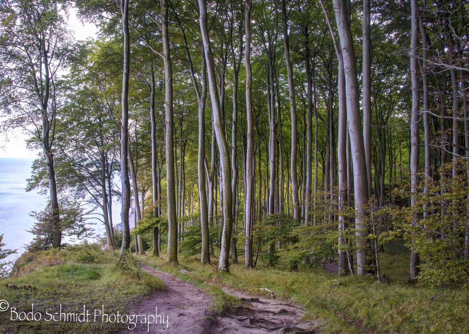 Der Hochuferweg an der Kreideküste im Jasmund Nationalpark