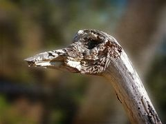 Der hölzerne Emu