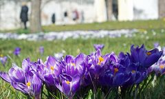 Der Hofgarten des Schloss Dachau in voller Blüte