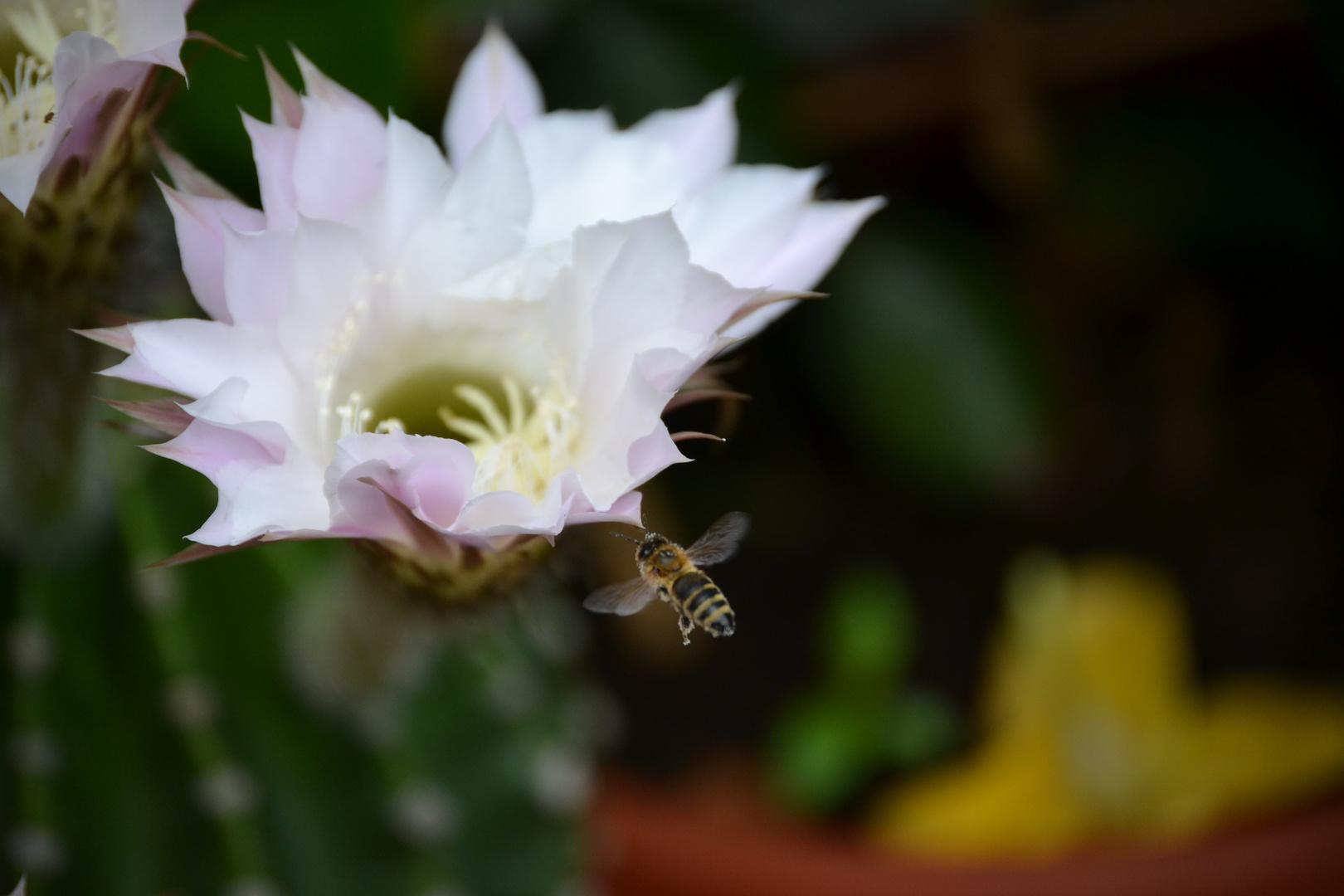 Der Honigmacher