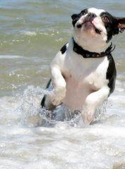 Der Hund im Meer
