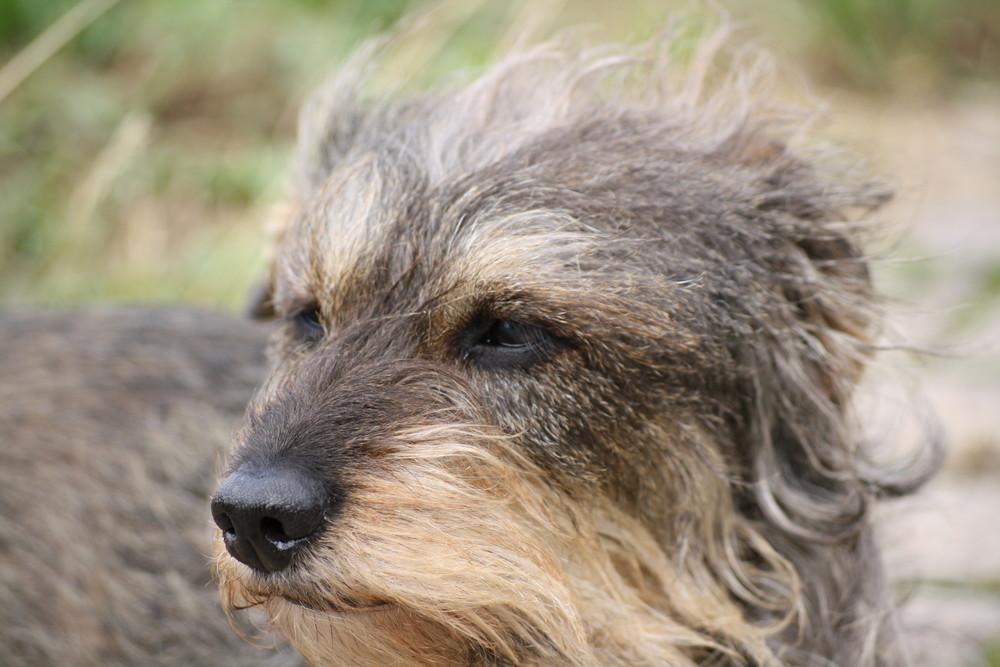 Der Hund im wind