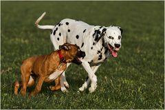 Der Hund von Baskerville II
