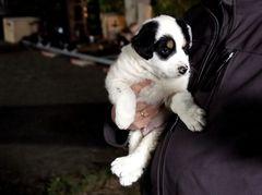 Der Hund von Baskervilles ...