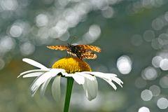 Der im Licht tanzende Schmetterling! - La danse du papillon à la lumière du soleil!