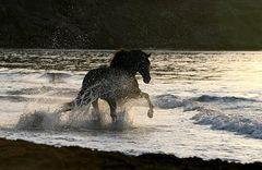 Der ins Meer ging ;-)