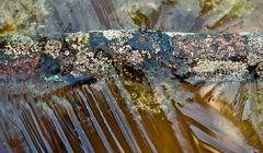 Der ins Wasser gefallene Ast ist tief gefroren! - Une branche est tombée dans l'eau et a gelée..!