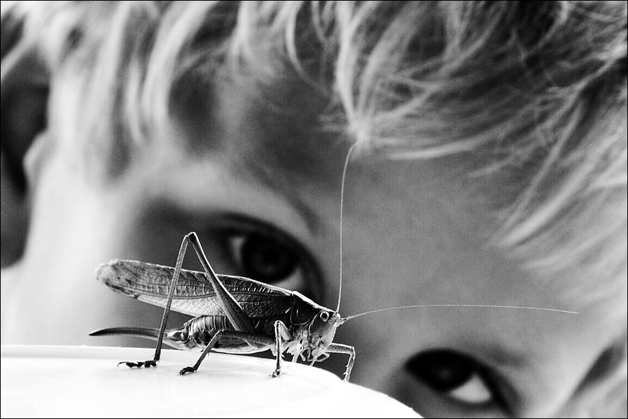 der insektenflüsterer 5