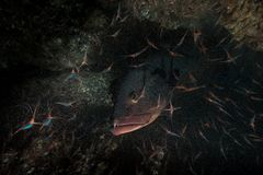 Der Jäger im Shrimpcave...