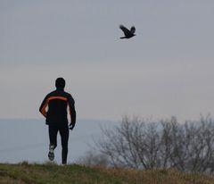 der jogger und die krähe