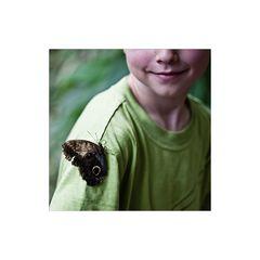 [ Der Junge mit dem Schmetterling ... ling ...ling ... ]