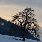 Der kahle Baum