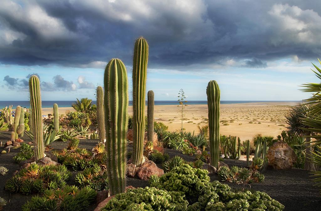 Der Kaktusgarten