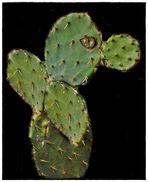 Der Kaktusmann