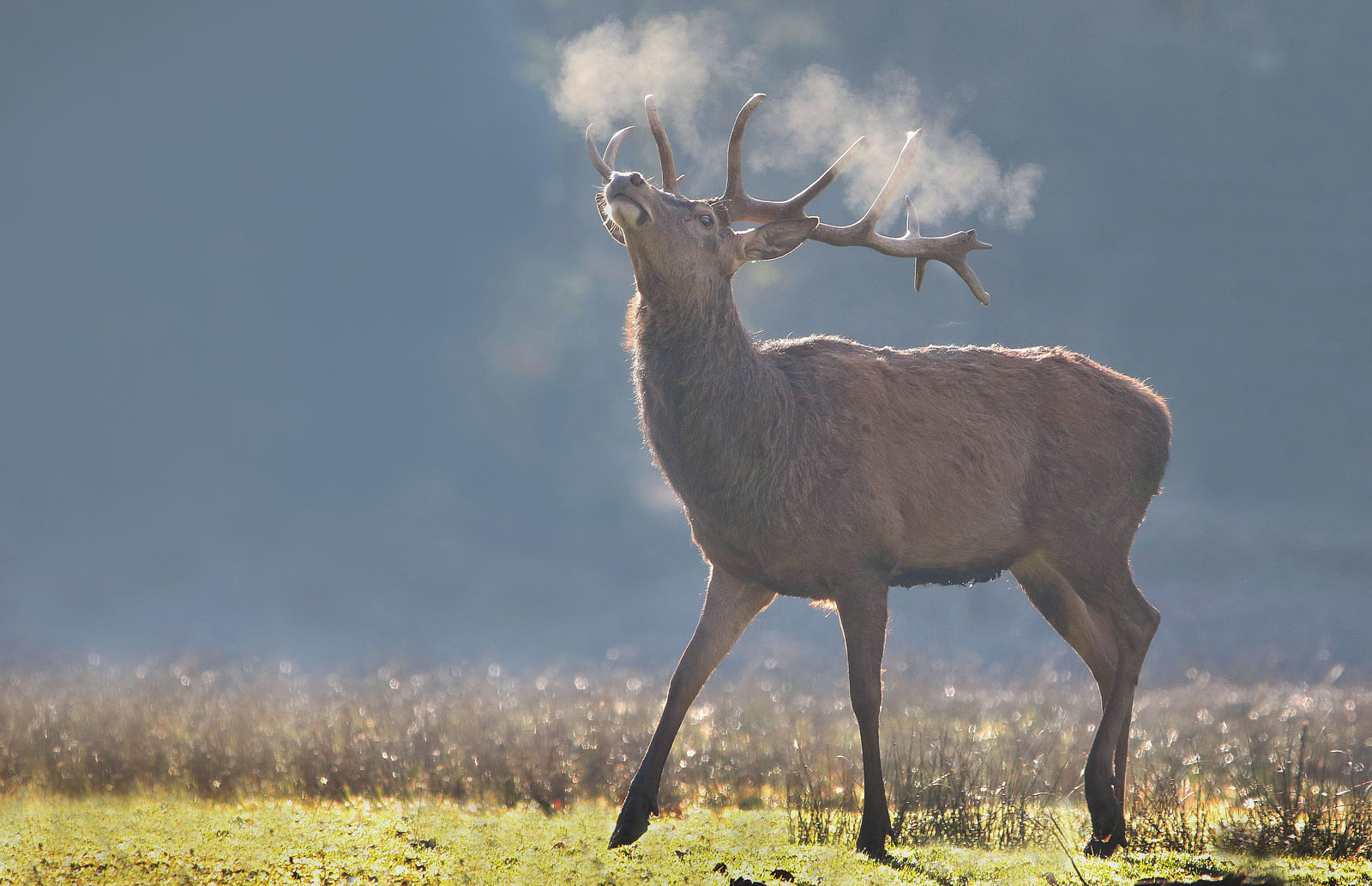 Der kalte Atem des Hirschs
