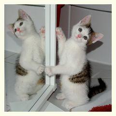 Der Kampf mit dem Spiegelbild ..