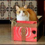 Der Karton gehört mir