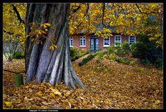 Der Kastanienbaum ... - The chestnut tree near the river Elbe