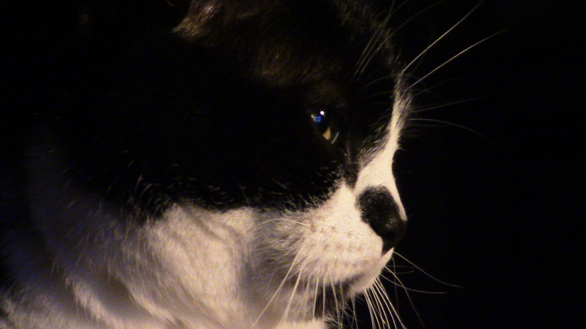 der Katz'