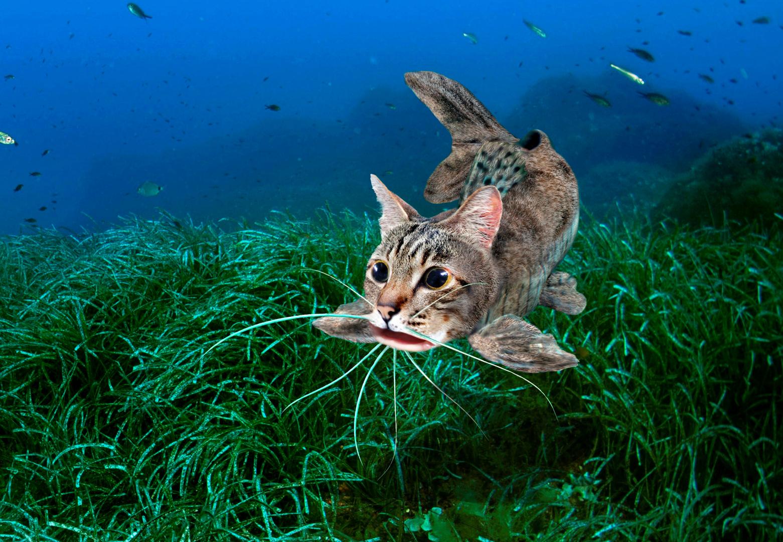 Der Katzenfisch