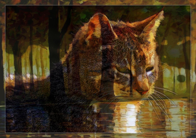 Der Katzenwald