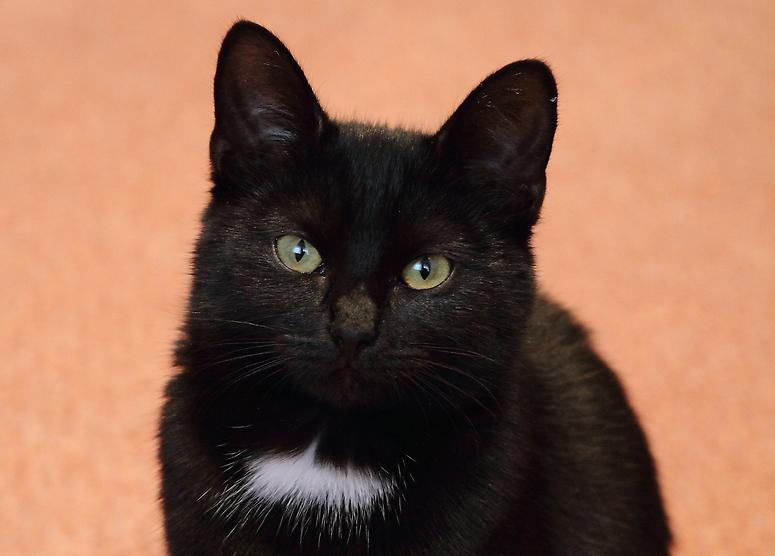 Der Katzerl Blick
