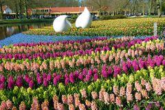 Der Keukenhof in Holland - am 21. 4. 2013 -
