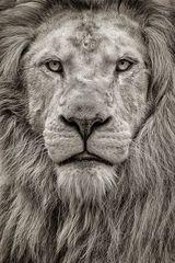 Der King