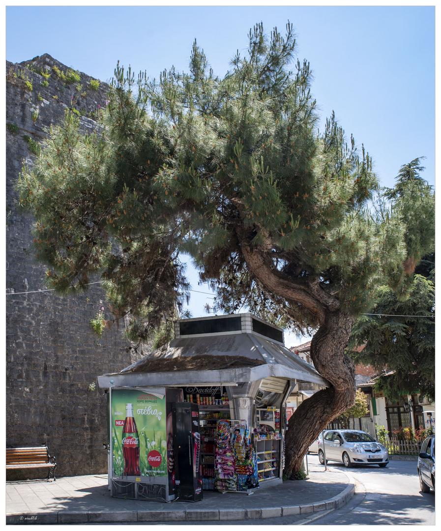 Der Kiosk und sein Baum...