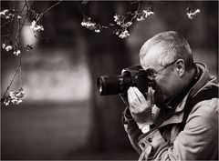 Der Kirschblütenkönig :-)