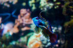 Der kleene Punkerfisch :)