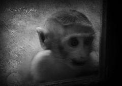 Der kleine Affe hinter dem Fenster