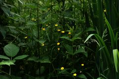 der kleine Dschungel