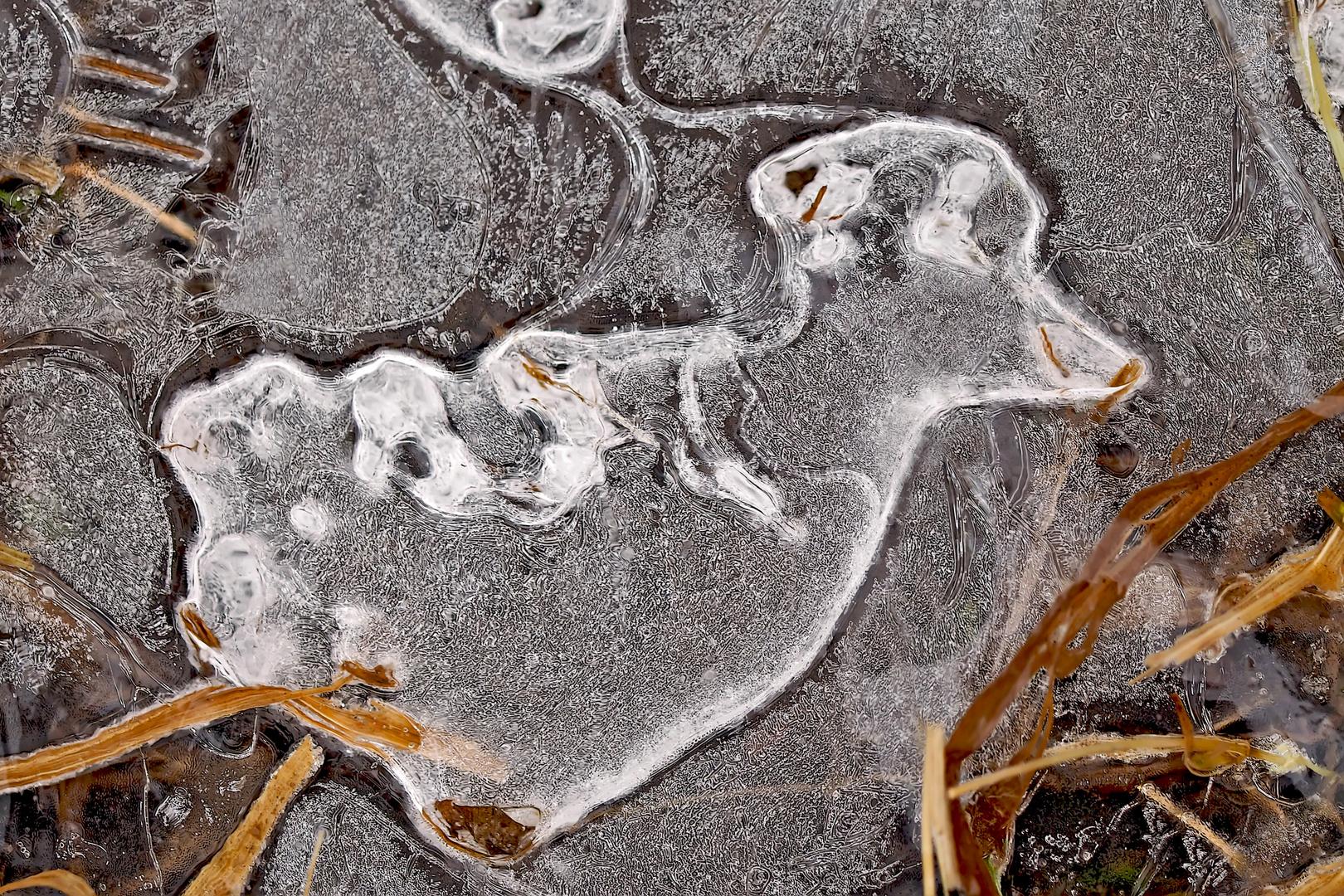 Der kleine Eishund! - Le petit chien fait de glace...