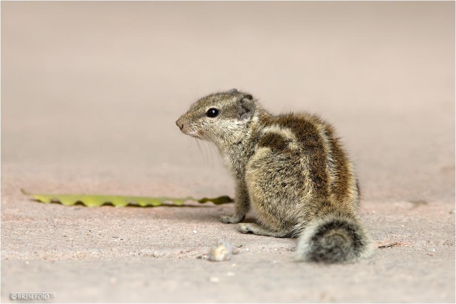 Der kleine Feger :-)