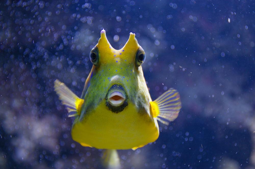 Der kleine gelbe neugierige fisch foto bild tiere zoo for Kleine fische