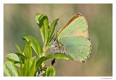 Der kleine Grüne (2)...