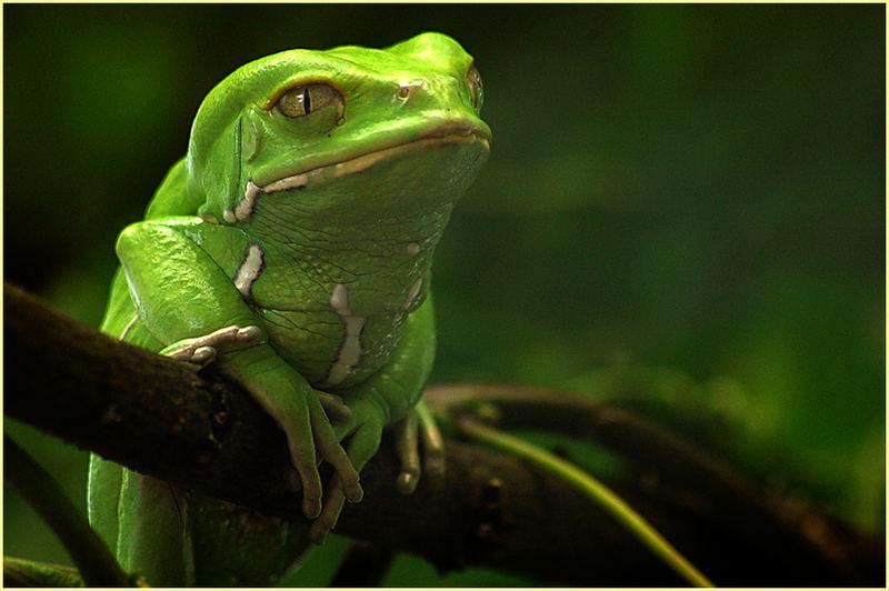 der kleine grüne