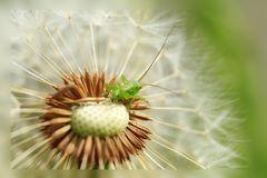 Der kleine grüne auf der zarten Weissen