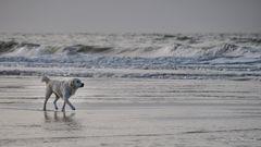 Der kleine Hund und das Meer