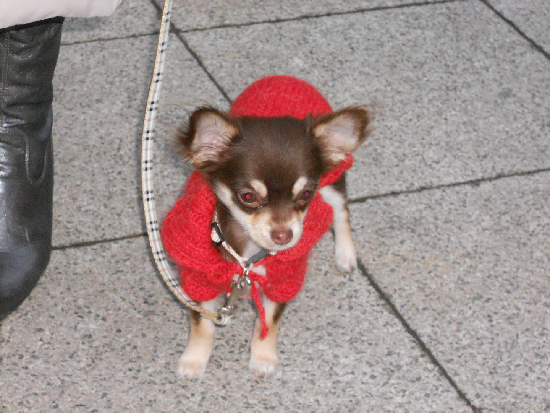 Der kleine Hunde König