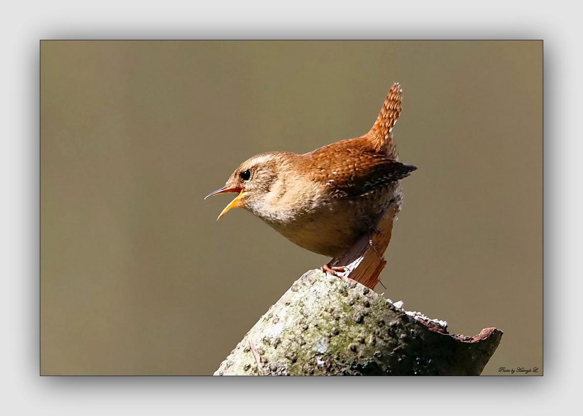 der kleine könig foto  bild  tiere wildlife wild