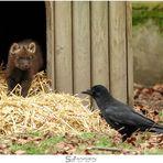 Der kleine Mähnenwolf und die Krähe (I)